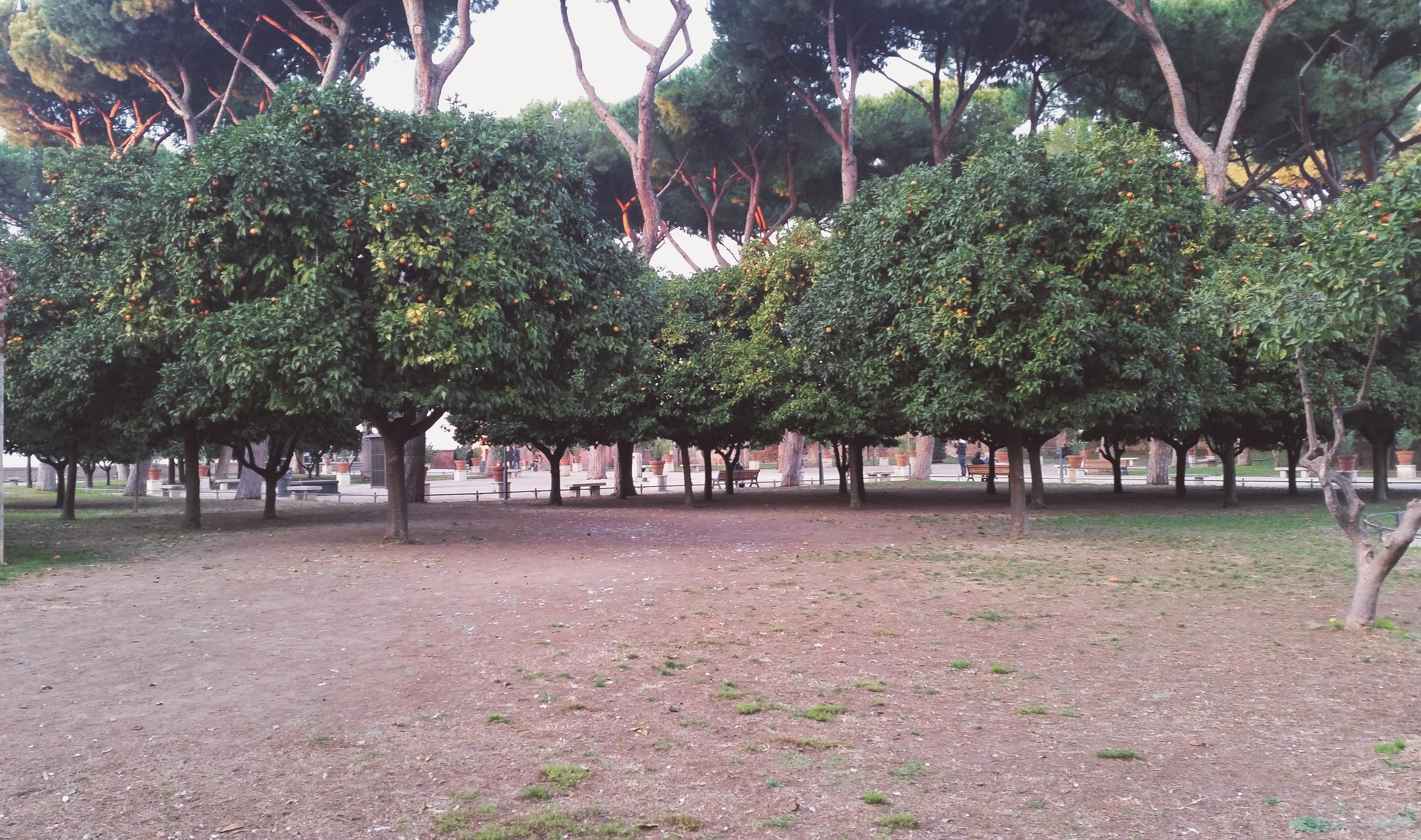 giardino aranci