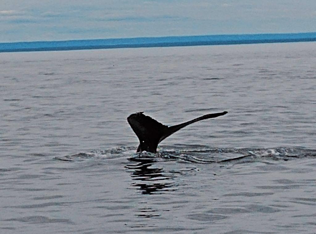 balena canada