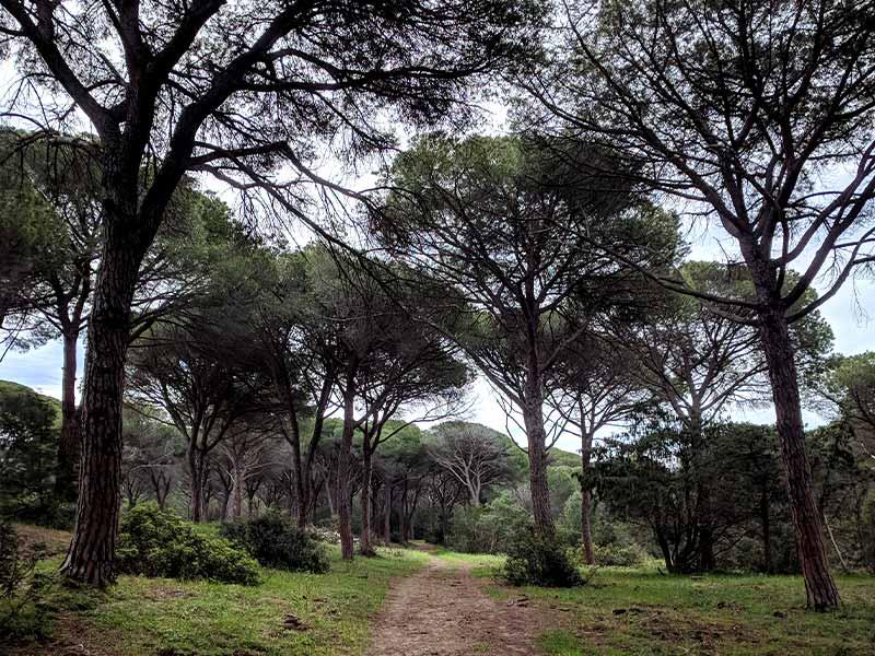 pineta-granducale-itinerario-a2-le-torri-maremma